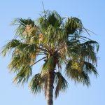 Himmel, eine Palme